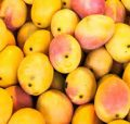 Know the right way to eat mango. Secret tip for amazing results